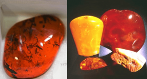 Amber Jewelry Color Gainesville